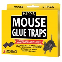Harris Mouse Glue Traps (2 Pack)